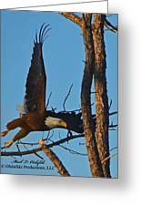 American Bald Eagle I Mlo Greeting Card