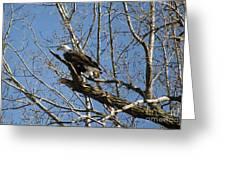 American Bald Eagle In Illinois Greeting Card