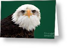 American Bald Eagle On The Look Out Greeting Card