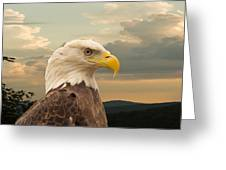 American Bald Eagle With Peircing Eyes Greeting Card by Douglas Barnett