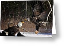 American Bald Eagles Greeting Card