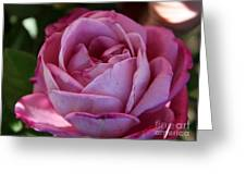 American Beauty IIi Greeting Card