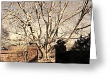 American Beech Tree - Dumbarton Oaks Greeting Card
