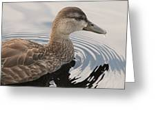 American Black Duck Greeting Card