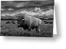 American Buffalo Or Bison In The Grand Teton National Park Greeting Card