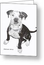 American Bull Dog As A Pup Greeting Card by Jack Pumphrey