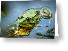 American Bull Frog Greeting Card