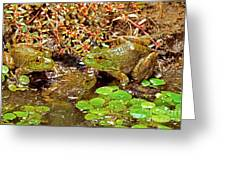 American Bullfrogs Rana Catesbeiana Greeting Card