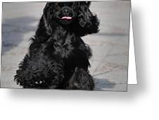 American Cocker Spaniel In Action Greeting Card by Camilla Brattemark