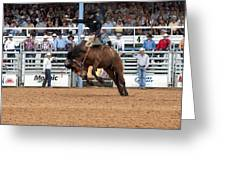 American Cowboy Riding Bucking Rodeo Bronc I Greeting Card