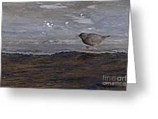 American Dipper   #5851 Greeting Card