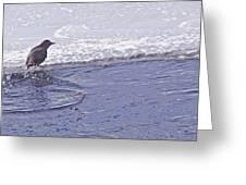 American Dipper   #8163 Greeting Card