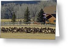 American Elk   #4305 Greeting Card