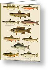 American Game Fish Greeting Card