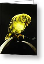 American Gold Finch Greeting Card