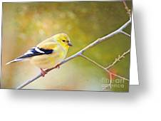 American Goldfinch - Digital Paint Greeting Card