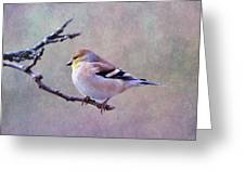 American Goldfinch 2 Greeting Card