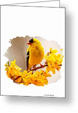 American Goldfinch Branch Of Forsythia Greeting Card