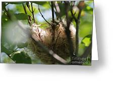 American Goldfinch Nest Under Construction Greeting Card