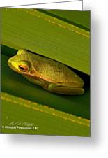 American Green Tree Frog I Mlo Greeting Card