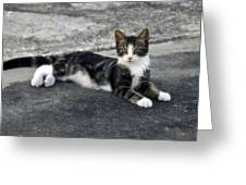American Grey Tiger Stripe Kitten Portrait Greeting Card