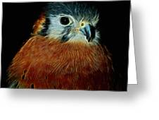 American Kestrel Digital Art Greeting Card