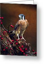 American Kestrel II Greeting Card