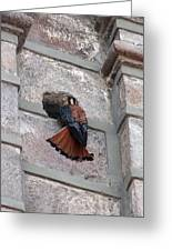 American Kestrel Perched On The Side Of A Building Greeting Card