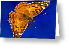 American Lady Butterfly Blue Square Greeting Card