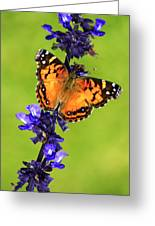 American Lady Butterfly Greeting Card