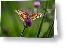 American Lady Butterfly In Garden Greeting Card
