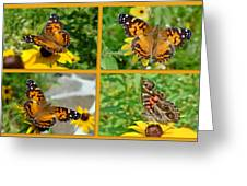 American Lady Butterfly - Vanessa Virginiensis Greeting Card