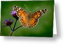 American Lady Butterfly With Green Background Greeting Card
