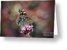 American Painted Lady Butterfly 2014 Greeting Card