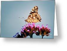 American Painted Lady Butterfly Blue Background Greeting Card