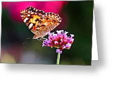 American Painted Lady Butterfly Pink Greeting Card