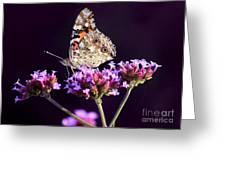 American Painted Lady Butterfly Purple Background Greeting Card