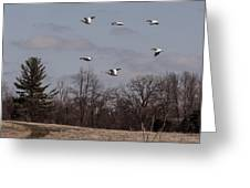 American Pelican Fly-over Greeting Card