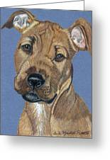 American Pit Bull Terrier Puppy Greeting Card