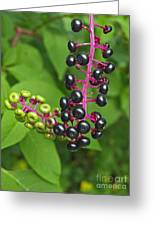 American Pokeweed  Greeting Card