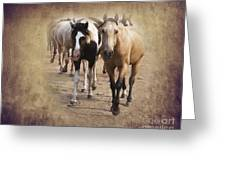 American Quarter Horse Herd Greeting Card by Betty LaRue