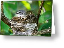 American Redstart Nest Greeting Card