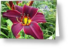 American Revolution Daylily Greeting Card