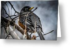 American Robin 2 Greeting Card