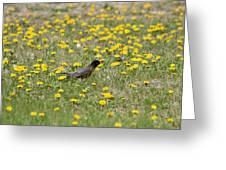 American Robin Among Dandelions Greeting Card
