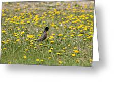 American Robin In A Field Of Dandelions Greeting Card