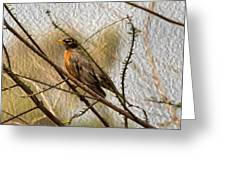 American Robin On A Branch Greeting Card