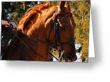 American Saddlebred 4 Greeting Card