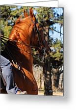 American Saddlebred Horse Head Shot Greeting Card