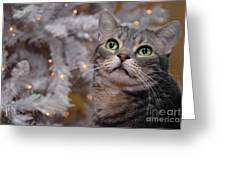 American Shorthair Cat With Holiday Tree Greeting Card